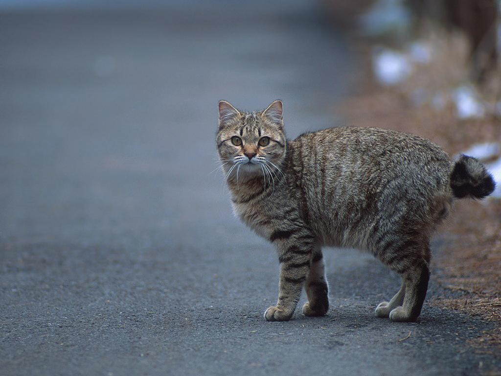 Коты и кошки из балета коты в сапогах - cc5e